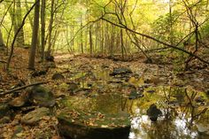 Silver Creek in the West Woods by Bruce Patrick Smith on 500px