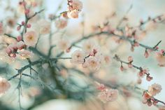 cherry blossom-color palette