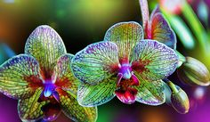 Fractal Orchids, Orchid Photography - Flower Art