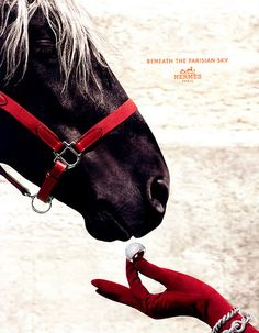 Love it!!!  Hermès