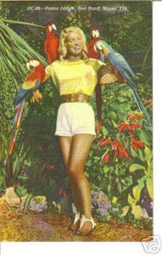 Parrot Jungle Red Road Miami Florida vintage postcard!