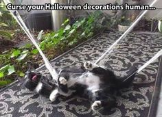 funny cat playing with halloween decorations