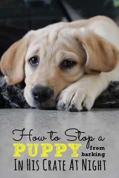 How to stop a puppy
