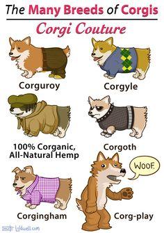 The many breeds of Corgis