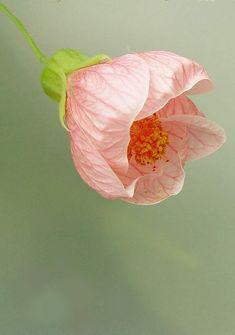 {ilona} Beautiful gorgeous pretty flowers
