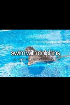 Bucket list   before I die   swim with dolphins