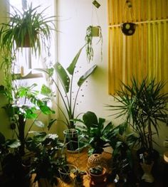Plants in the house