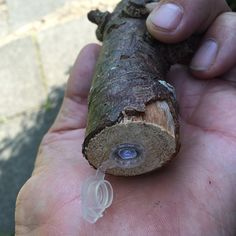 plastic nano #geocache hidden in a piece of wood