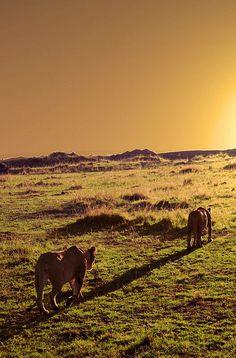 Sunset at Masai Mara, Rift Valley, Kenya