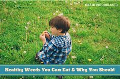 Healthy Weeds You Can Eat & Why You Should