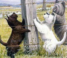 Scottie, Westie & Skye Terrier Dogs Louis Agassiz Fuertes 1910 Original Antique Lithograph To Frame
