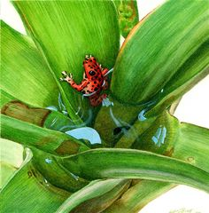 Bromeliad Microhabitat Painting by Logan Parsons - Bromeliad Microhabitat Fine Art Prints and Posters for Sale