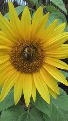 I love watching bees swimming in pollen.