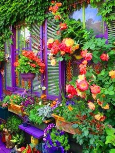 I am going to paint my leftover shutters purple and make them into a garden screen.  This picture is my inspiration.