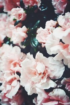 lights, pink roses, pink flowers, cotton candy, soft pink, candies, fresh flowers, florals, blossoms