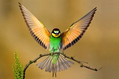 Absolutely Gorgeous Bird..Not sure what type of bird this is...But I SOOO want one as a pet! lol