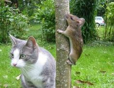mice, funny animals, hiding places, funny cat photos, funny animal pics, cat food, playing games, funny pictures, funny cats