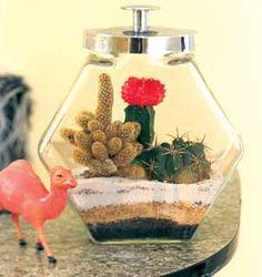 Terrarium Gardening with cacti