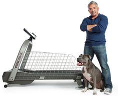 Cesar Millan Training Dog On Treadmill