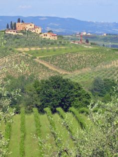 Vineyard Owner/vintner.