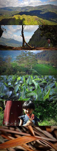 Images from Ella, Sri Lanka