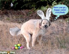 easter dogs - Google Search