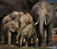 Photo Sticking together by Alexander Riek on 500px