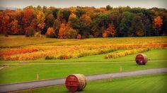 Autumn Landscape ~ Glenora Wine Cellars, Dundee, NY, Finger Lakes