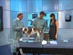Great tips for ticks, fleas and ear mites