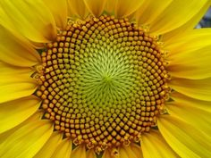 Fibonacci Sequence Illustrated by Nature