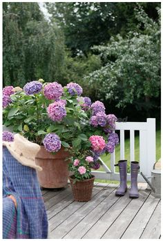 love the potted hydrangea