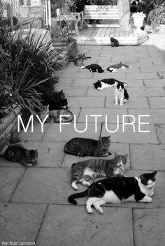 #crazy#cat#lady