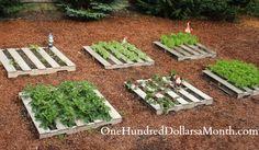 Growing vegetables in a pallet garden
