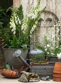 fern, white flowers, rustic gardens, vignett, garden decorations, metals, watering cans, gardening, garden stuff