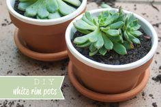 DIY White Rim Pots   Crafted Blog