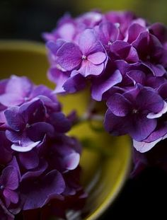 purple hydrangea.