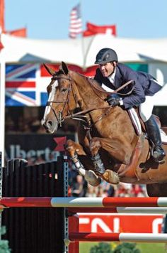 Sapphire Passes Away From Colic | The Chronicle of the Horse