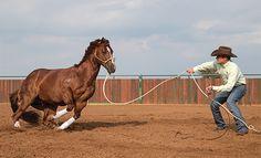 Clinton Anderson, Australian horse trainer