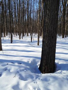 How to know when it is time to tap maple trees | Simple Bites