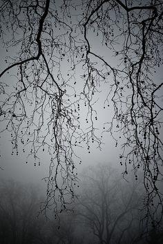 foggy silence #faerie