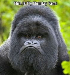 Monday Face   #MondayQuotes #Monday #Funny #Quotes #Sayings #EmployeeIncentives #EmployeeMotivation #EmployeeCommunication #EmployeeRewards #rewards #communication #motivation #incentives  #encouragement #EmployeeEncouragement #EmployeeAppreciation  http://quintloyalty.com/