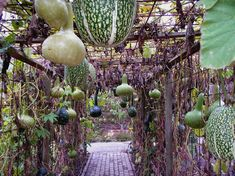 GROW in chicken area!!!!!!!    Taken at the Rosemoor Royal Horticultural Garden in Great Torrington, England, these squashes are thriving, growing up and over a trellis, creating a covered walkway. Not only are the plantings beautiful, they're edible, too.
