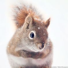 Winter Animal Art Print  Cute Animal Photography by NatureMandalas