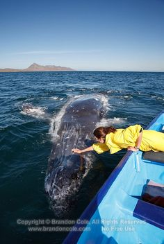 Whale watching in Mexico......oh my lanta!!! that would so be me right there