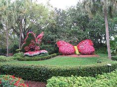 Flower Butterfly at Busch Gardens Tampa, Florida