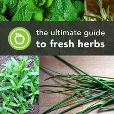The Ultimate Guide to Fresh Herbs   Greatist. Want to start my own herb garden.
