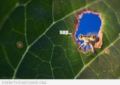 funny animals, funny animal pictures, funny animal pics, leaf window, bug, insect