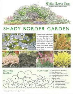 Heavens knows I need this in my shady backyard! Shady Border Garden Plan from White Flower Farm;  Border plan is designed to provide a long season of color and texture from flowers as well as foliage.