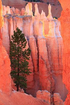Determined tree in Vermillion Rock Formations.   # Pin++ for Pinterest #