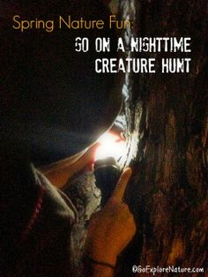 Go on a Nighttime Creature Hunt